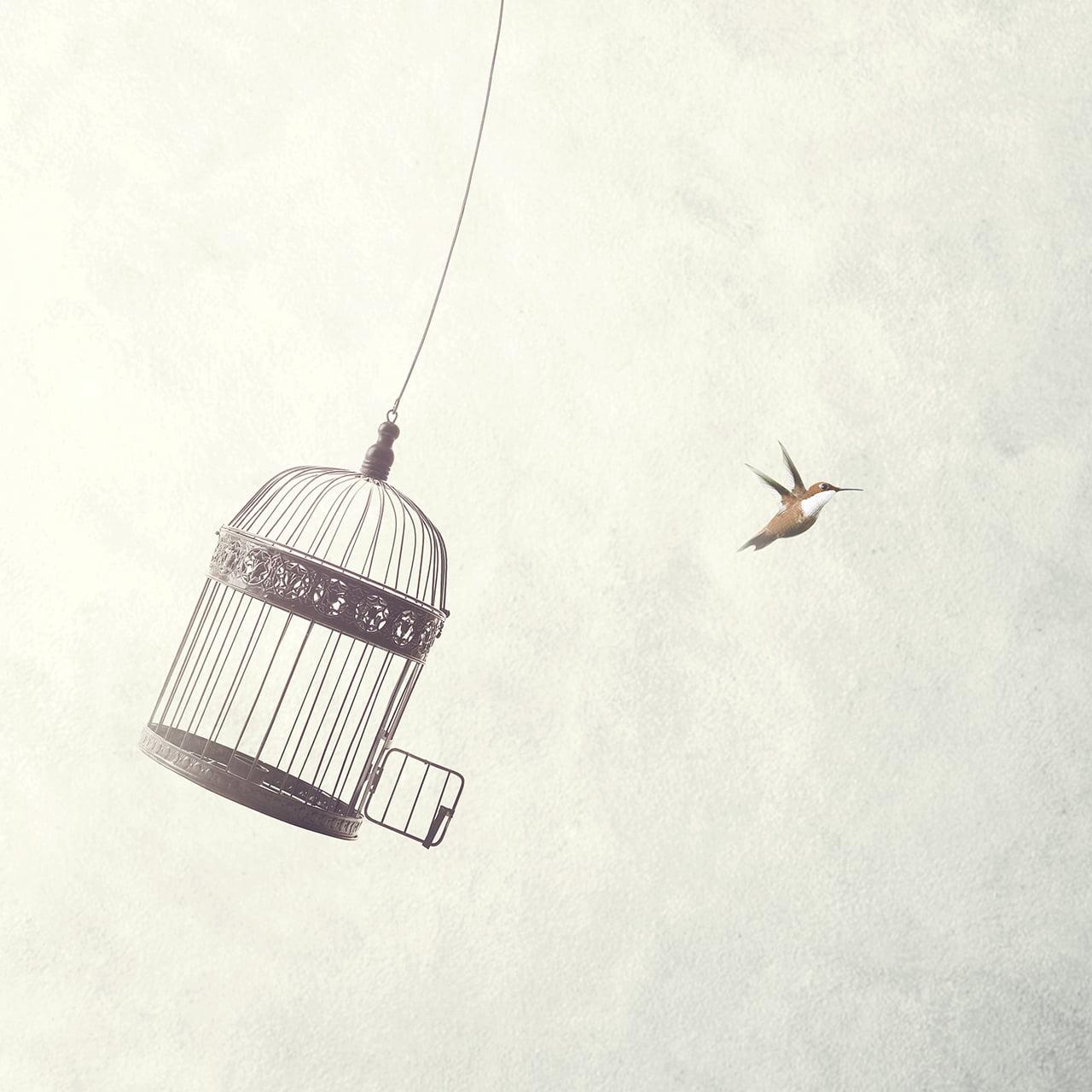 ציפור וכלוב